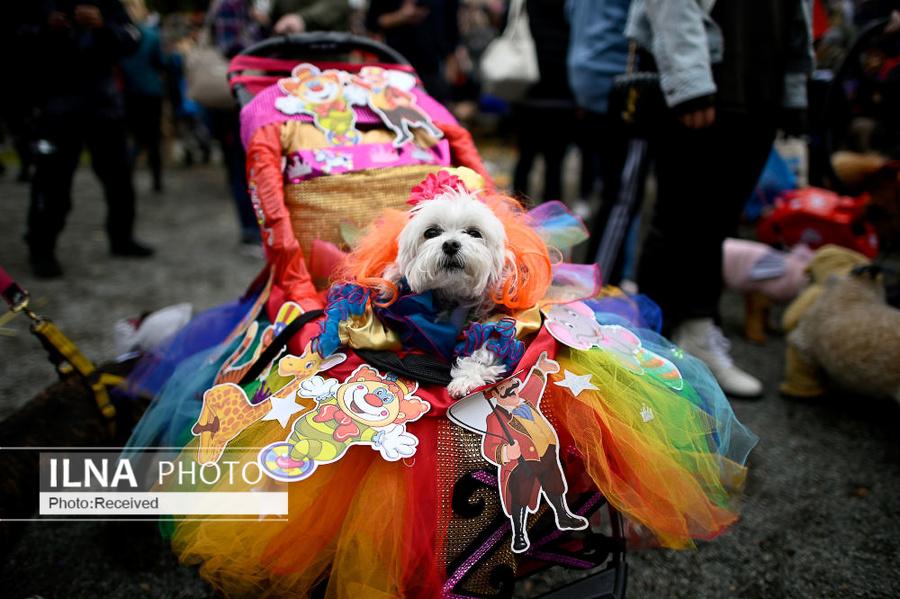 تصاویر زیبای رژه سگهای هالووینی در نیویورک