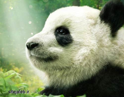 مستند Pandas 2018 با  کیفیت عالی و زبان اصلی + دوبله فارسی